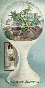 70s-terrarium-for-about-page