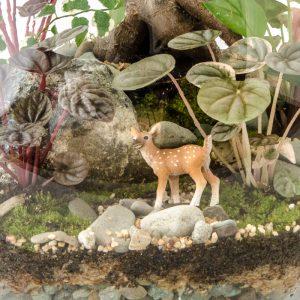 HPT-terrarium-closeup-forest-DarlingDeer-800px-7425