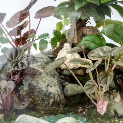 HPT-terrarium-closeup-forest-Laughing-Buddha-800px-7666
