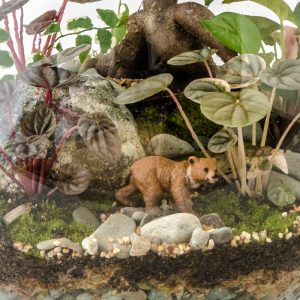 HPT-terrarium-closeup-forest-bear-800px-7426