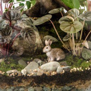 HPT-terrarium-closeup-forest-bunny-800px-7432