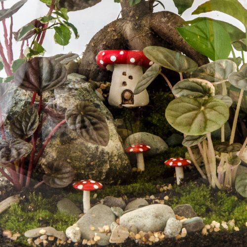 HPT-terrarium-closeup-forest-fairy-800px-7436
