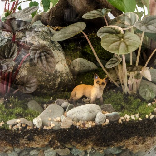 HPT-terrarium-closeup-forest-fox-800px-7431