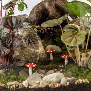 HPT-terrarium-closeup-forest-magicmushroom-800px-7439