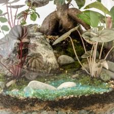 HPT-terrarium-closeup-forest-stream-800px-7453