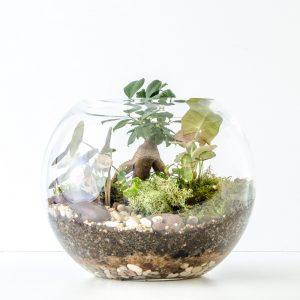 HPT-terrarium-fishbowl-classic-forest-medium-1000px-7732