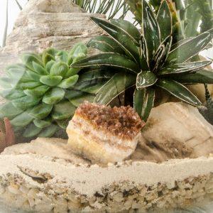 HPT-terrarium-closeup-desert-SuperbSelenite-800px-7400