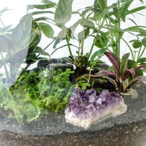 HPT-terrarium-closeup-jungle-amazing-amethyst-800px-7686