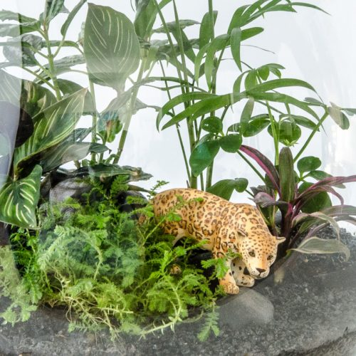HPT-terrarium-closeup-jungle-jaguar-800px-7674