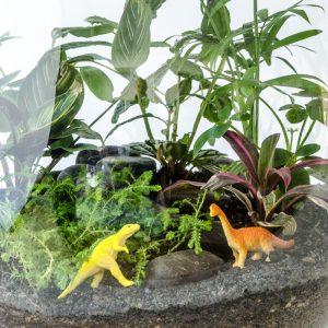 HPT-terrarium-closeup-jungle-jurassic-fantastic-800px-7691