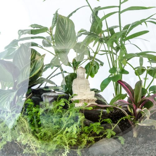 HPT-terrarium-closeup-jungle-meditating-buddha-800px-7685