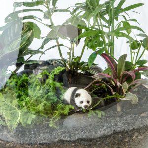 HPT-terrarium-closeup-jungle-perfect-panda-800px-7676