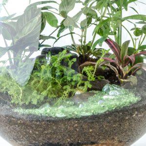 HPT-terrarium-closeup-jungle-stream-800px-7714