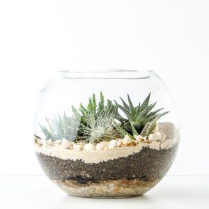 HPT-terrarium-fishbowl-classic-coast-medium-1000px-7737