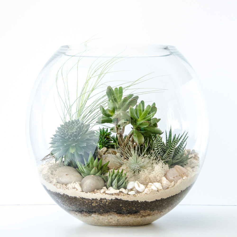 Get Your Quirky On And Customise Happy Place Terrariums