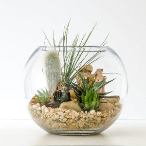 HPT-terrarium-fishbowl-classic-desert-m-1000px-7457