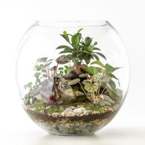 Classic Fishbowl
