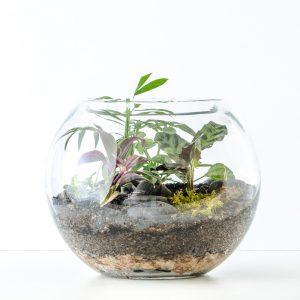 HPT-terrarium-fishbowl-classic-jungle-medium-1000px-7734