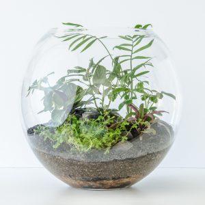 HPT-terrarium-fishbowl-classic-jungle-xl-1000px-7673