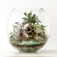 HPT-terrarium-fishbowl-forest-stream-xl-1000px-7453