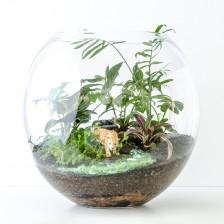 HPT-terrarium-fishbowl-jungle-jaguar-xl-1000px-7715
