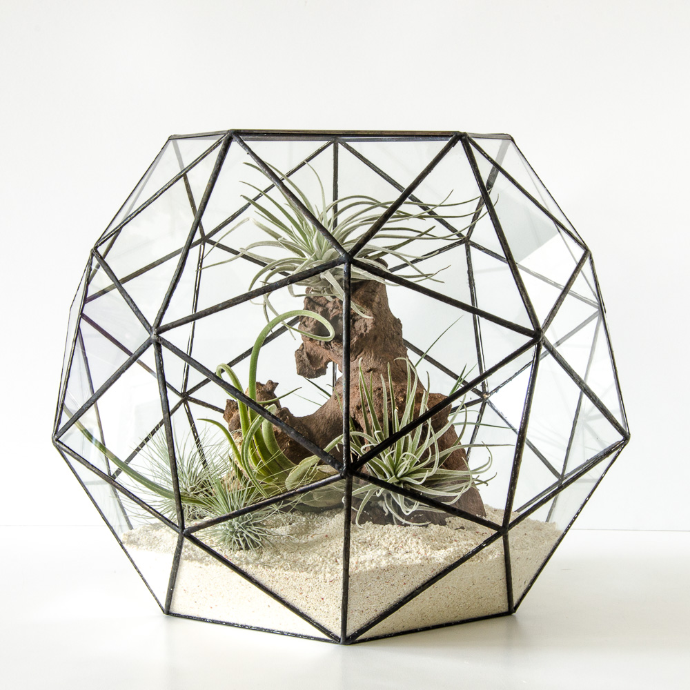 terrarium hexagon