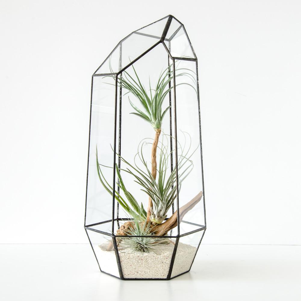 Tall Geodesic terrarium