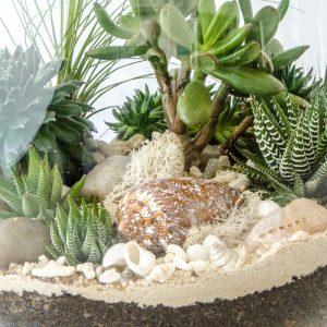 HPT-terrarium-closeup-coast-CaramelShards-800px-7699