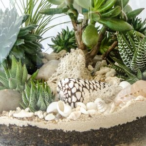 HPT-terrarium-closeup-coast-ChocolateandVanilla-800px-7700
