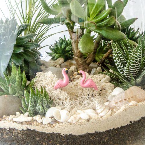 HPT-terrarium-closeup-coast-Flamingo-800px-7705