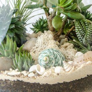HPT-terrarium-closeup-coast-TurquoiseDreaming-800px-7701