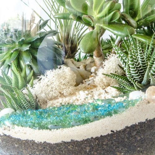HPT-terrarium-closeup-coast-lifesabeach-800px-7719