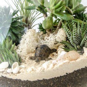 HPT-terrarium-closeup-coast-turtle-800px-7711