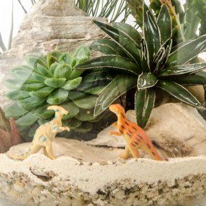 HPT-terrarium-closeup-desert-DinosaurDomain -800px-7407