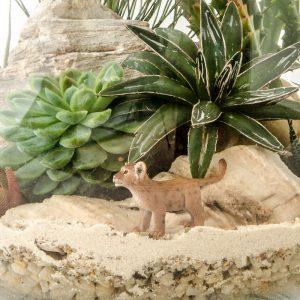 HPT-terrarium-closeup-desert-LionCubby-800px-7413