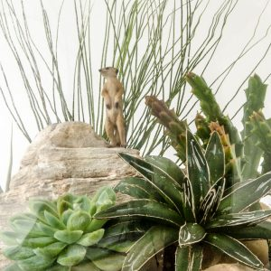 HPT-terrarium-closeup-desert-MeerkatMadness-800px-7408
