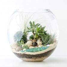 HPT-terrarium-fishbowl-1000px-7725