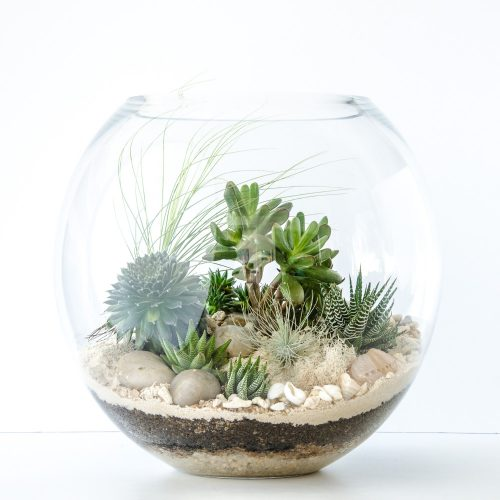 HPT-terrarium-fishbowl-classic-coast-xl-1000px-7697