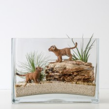 HPT-kits-for-kids-lioncubs-1000px-3809